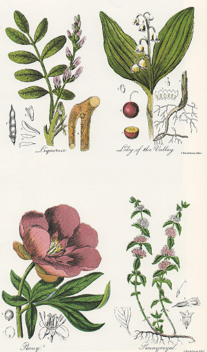 Botanical drawings engraved by John Bartholomew, Jr